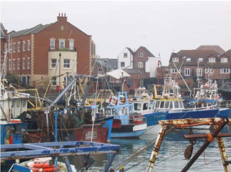 The International Institute of Fisheries Economics & Trade n°1